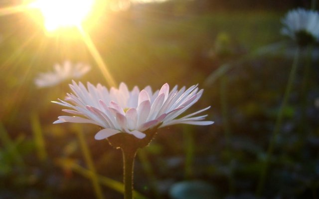 Sunshine-Flower-High-Quality-Wallpaper